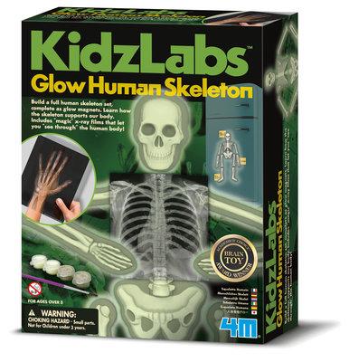 Human Science bouwdoos: menselijk skelet